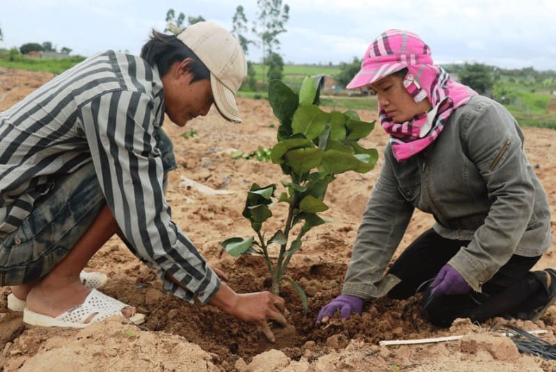 Phương pháp bón lót cho cây