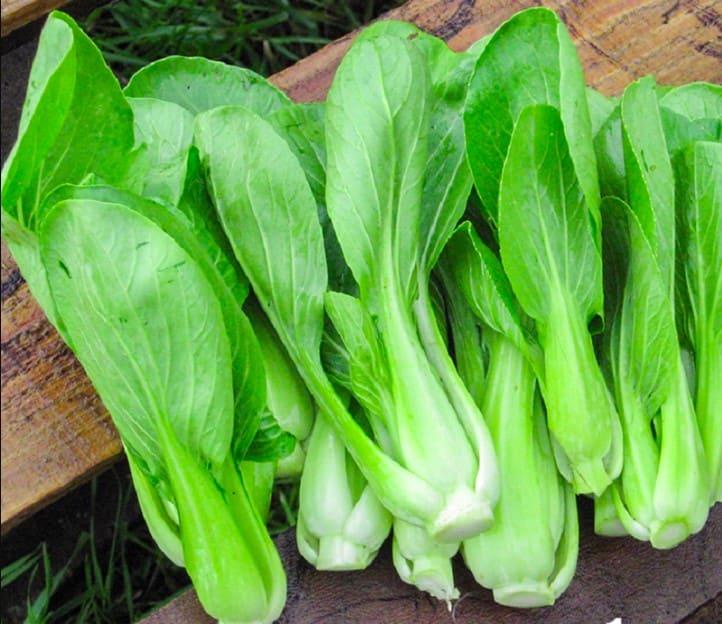 Hình ảnh cây cải thìa - Một trong những loại rau cải giàu dưỡng chất