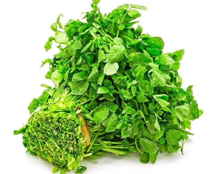 Hình rau cải xà lách xoong